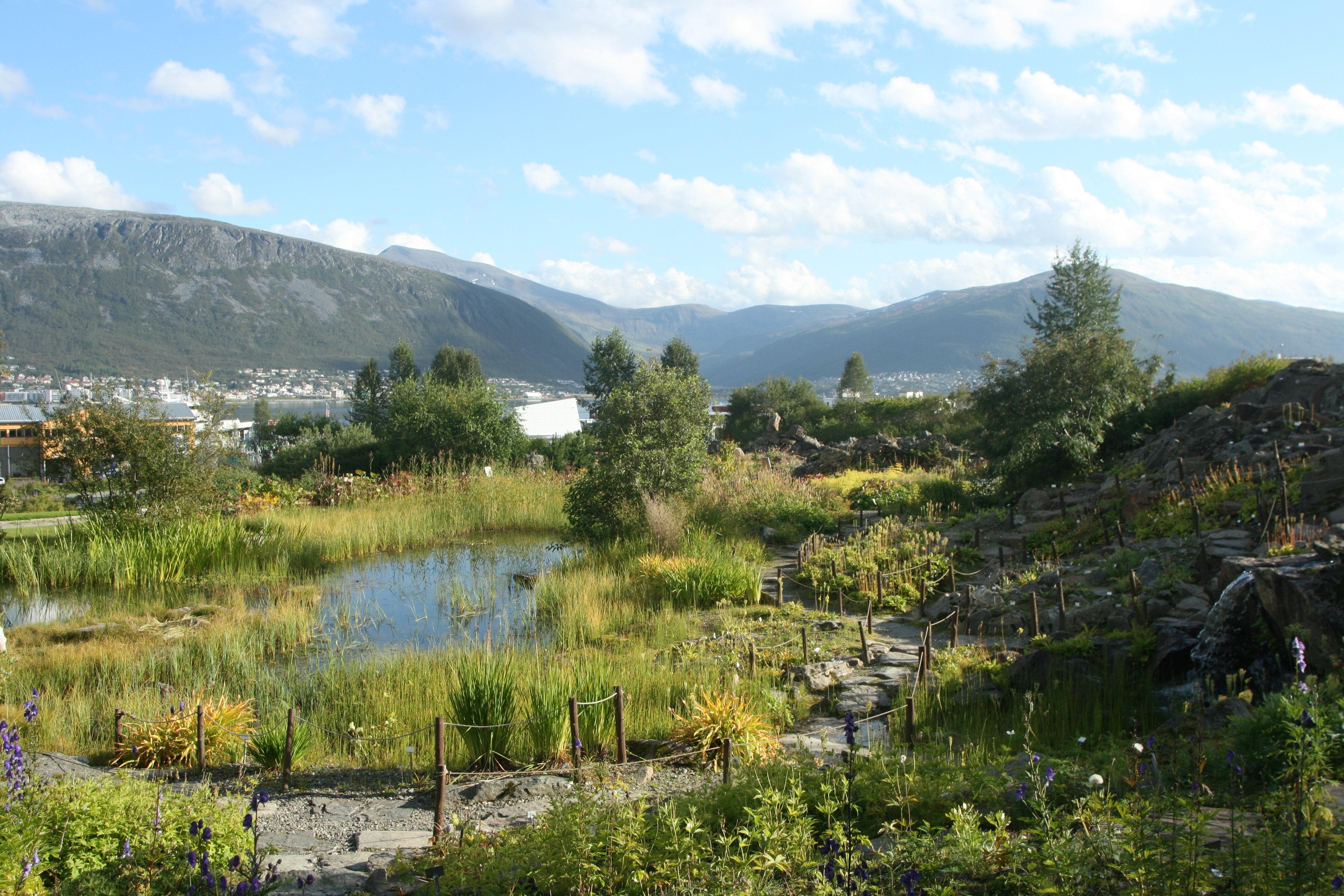 Arctic Alpine Garden