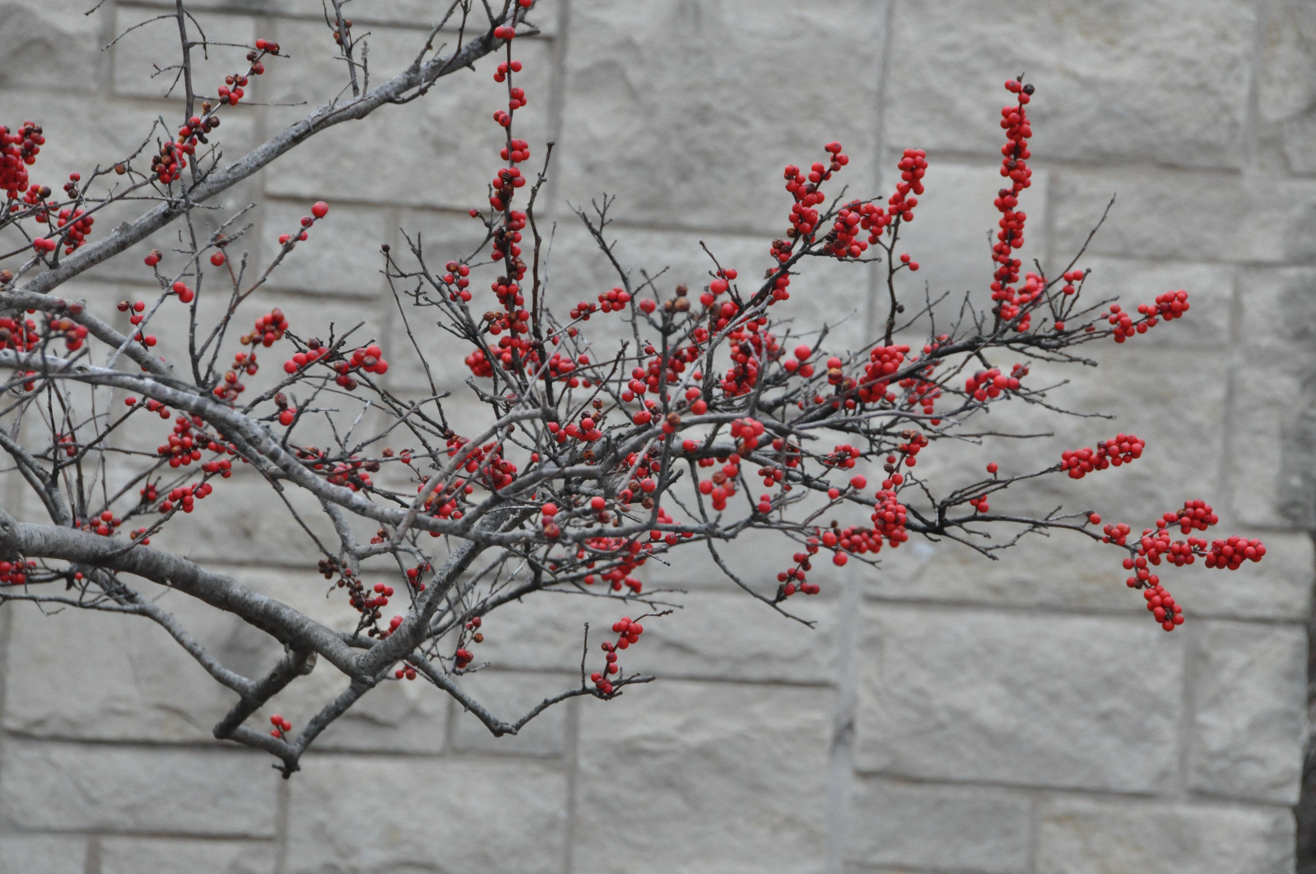 berries against wall