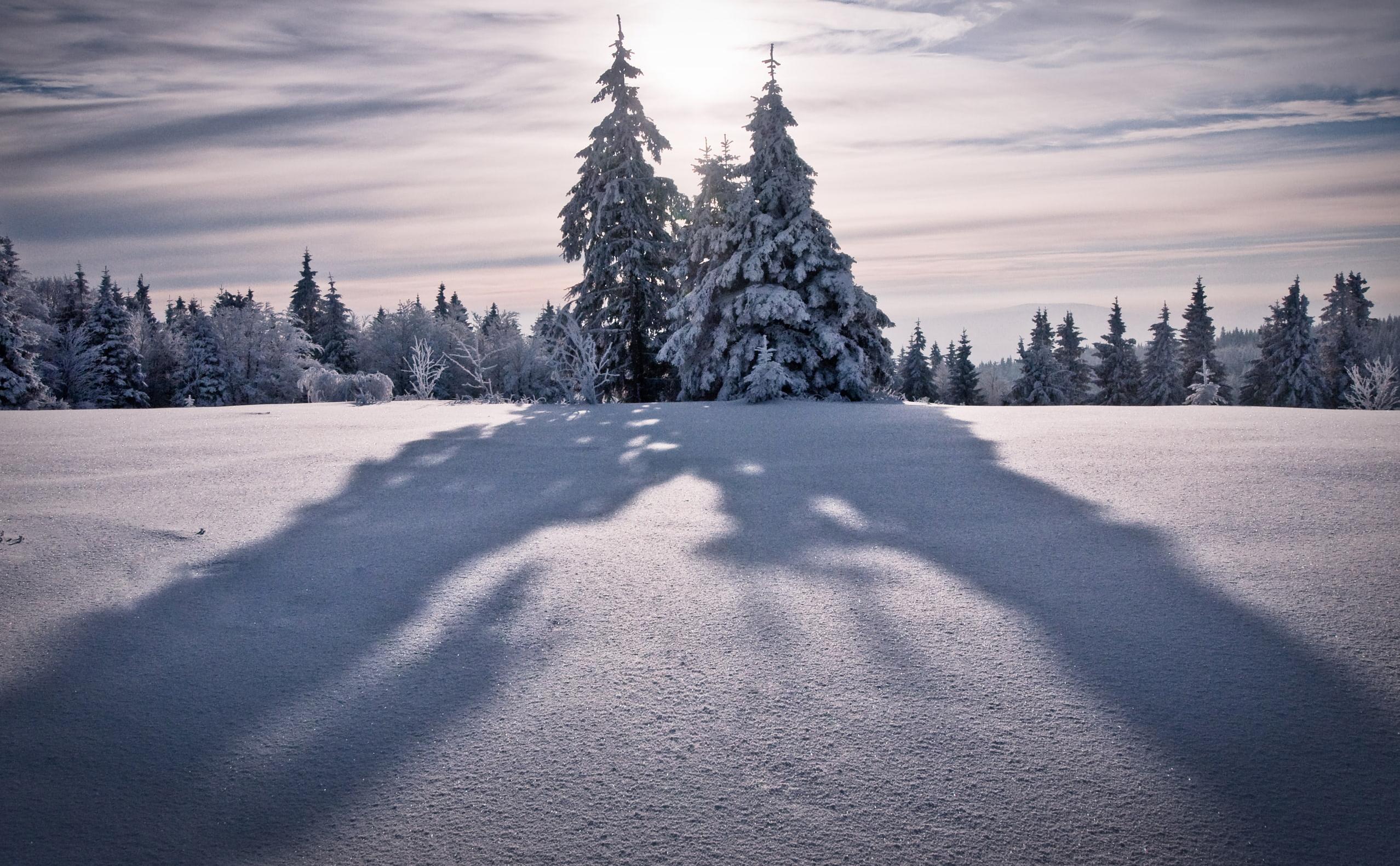 evergreen shadows