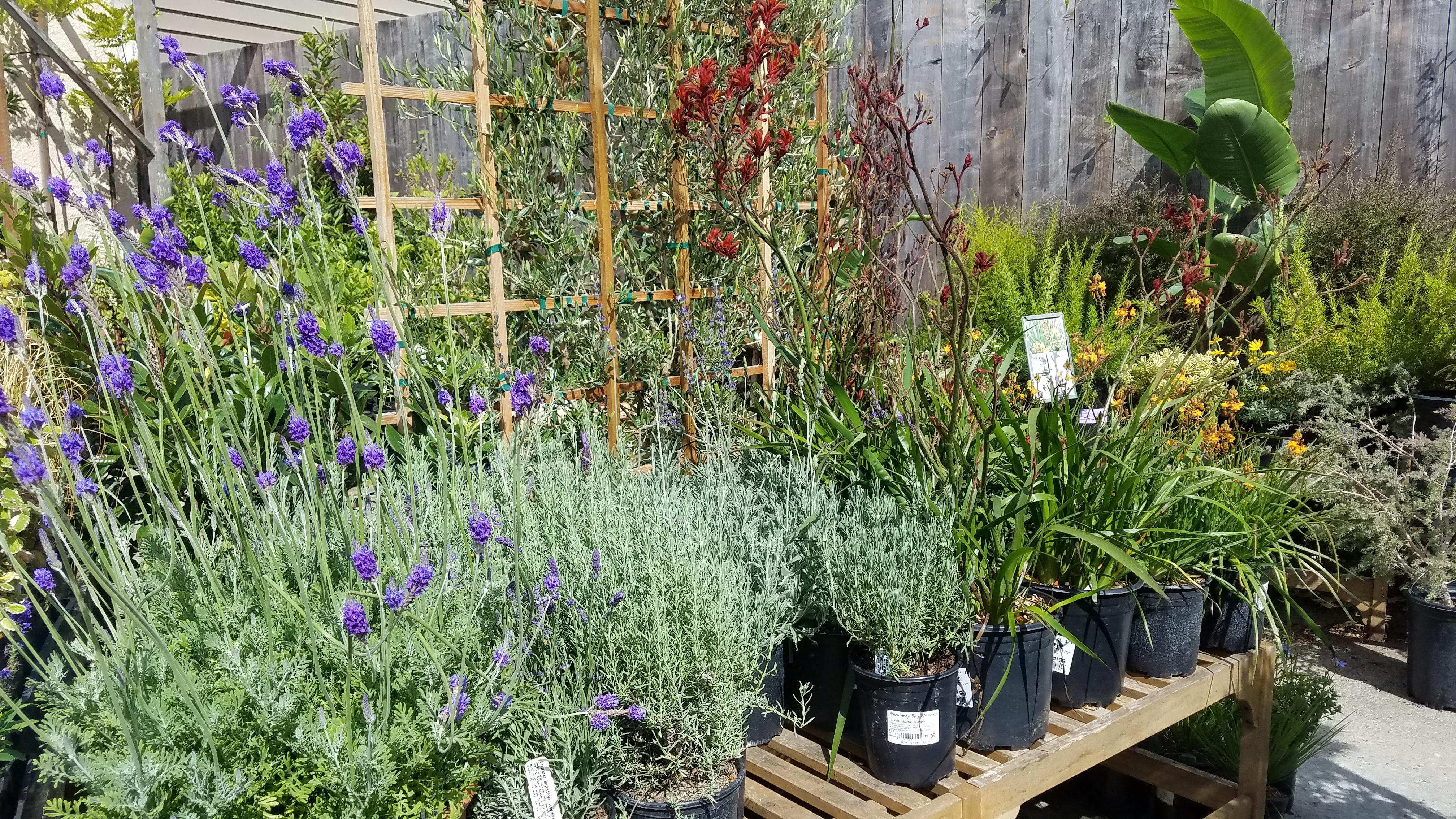 plants at garden center