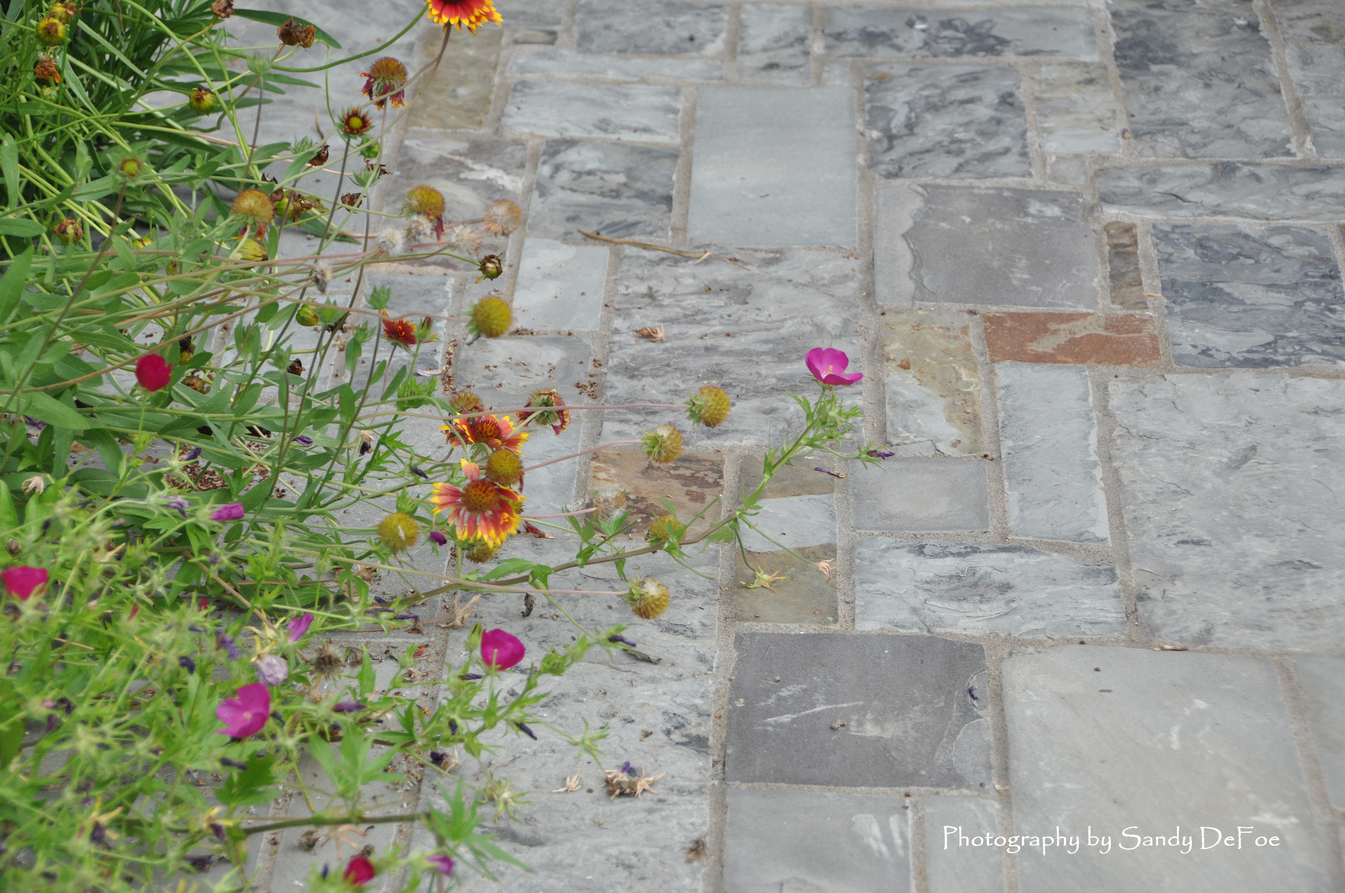 groundcovers on sidewalk