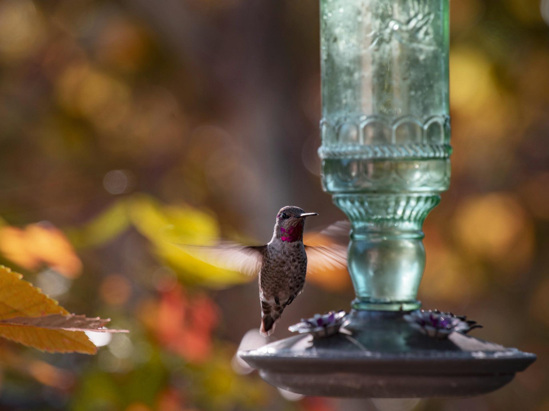 fall feeder