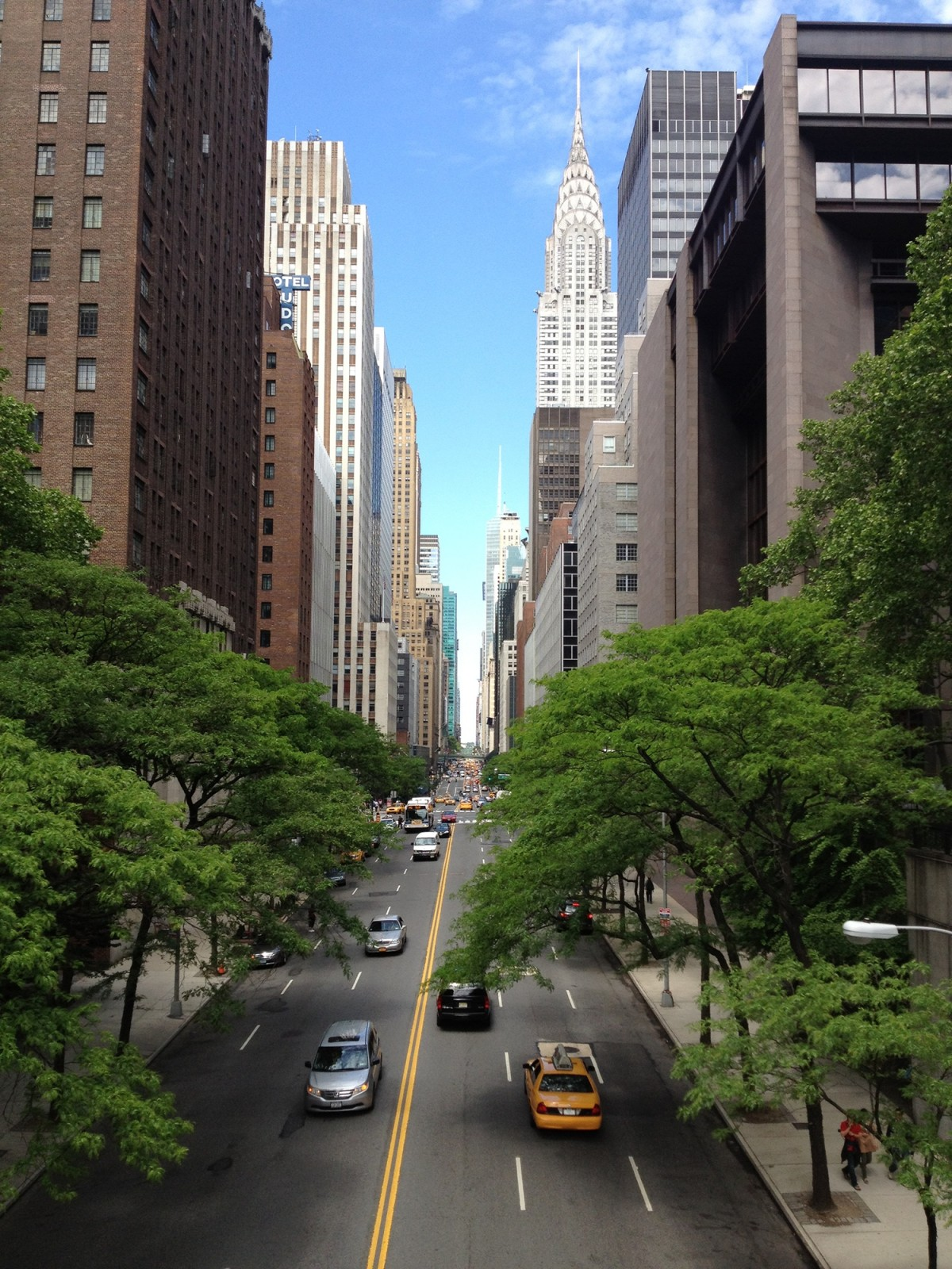 trees in New York City