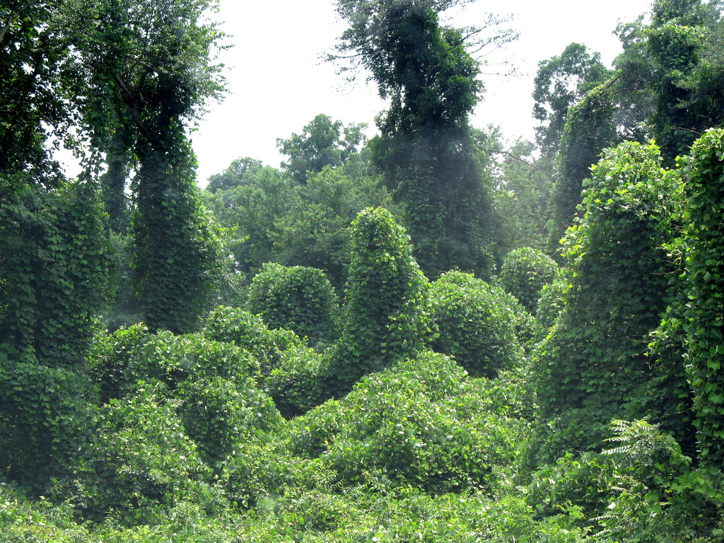 When vegetation becomes too dense, stress hormones rise.