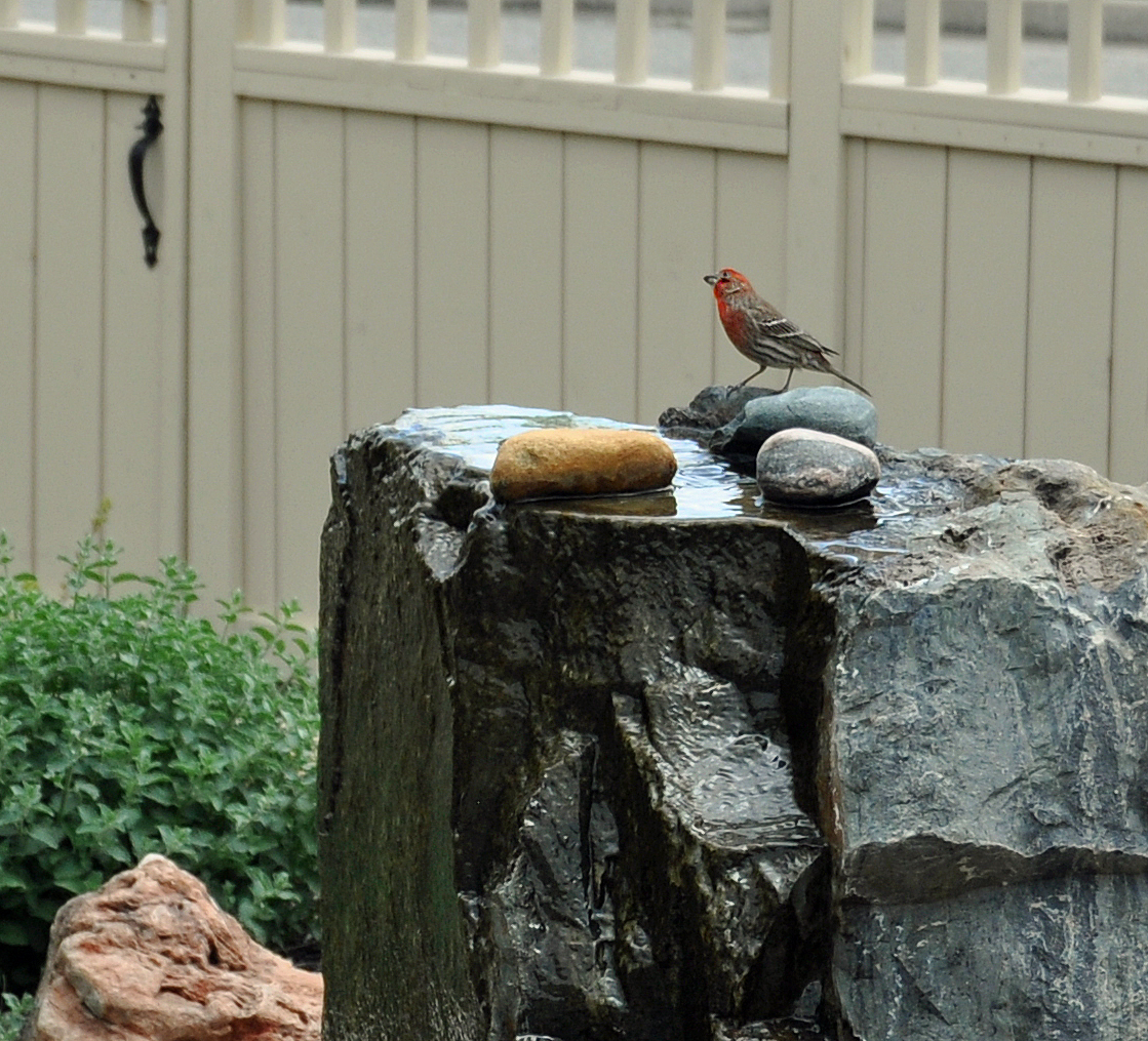 This bubbling rock water feature not only gives soothing sounds, but also invites birds to come for a drink.