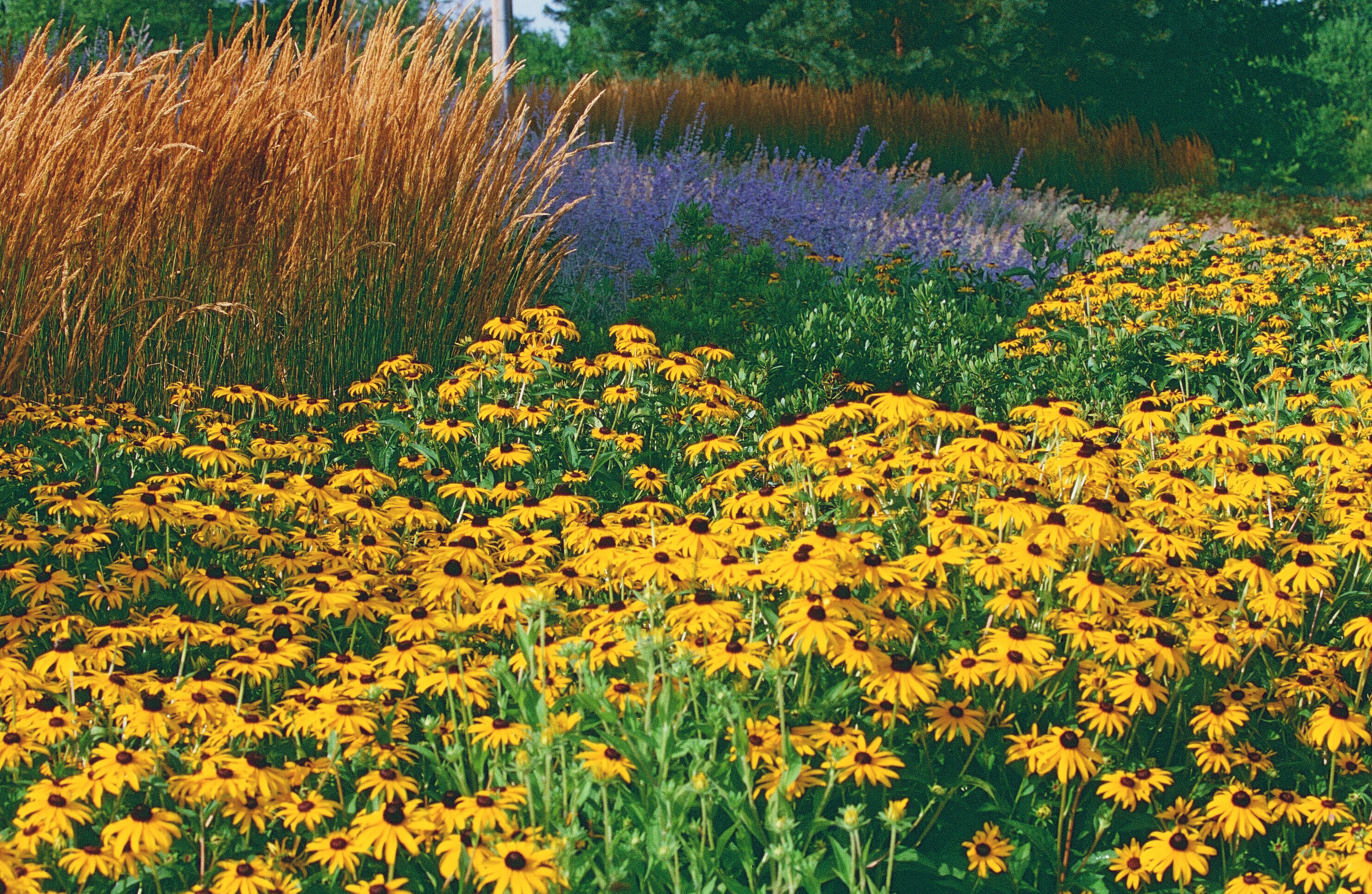 A magnificent garden of native plants.