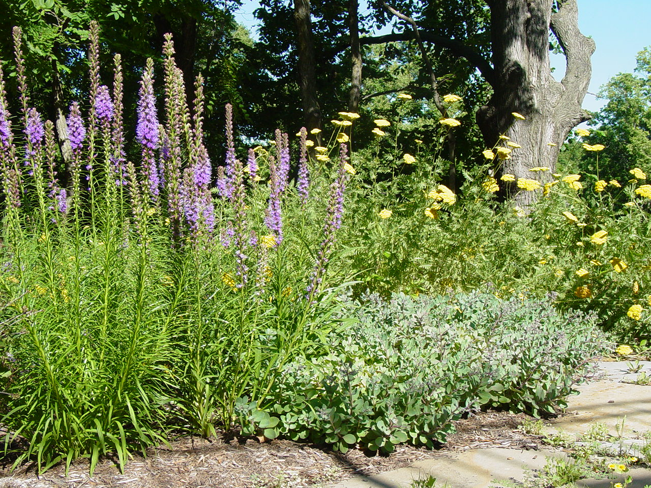 Corners of a yard can become excellent birding spots by including native plants.
