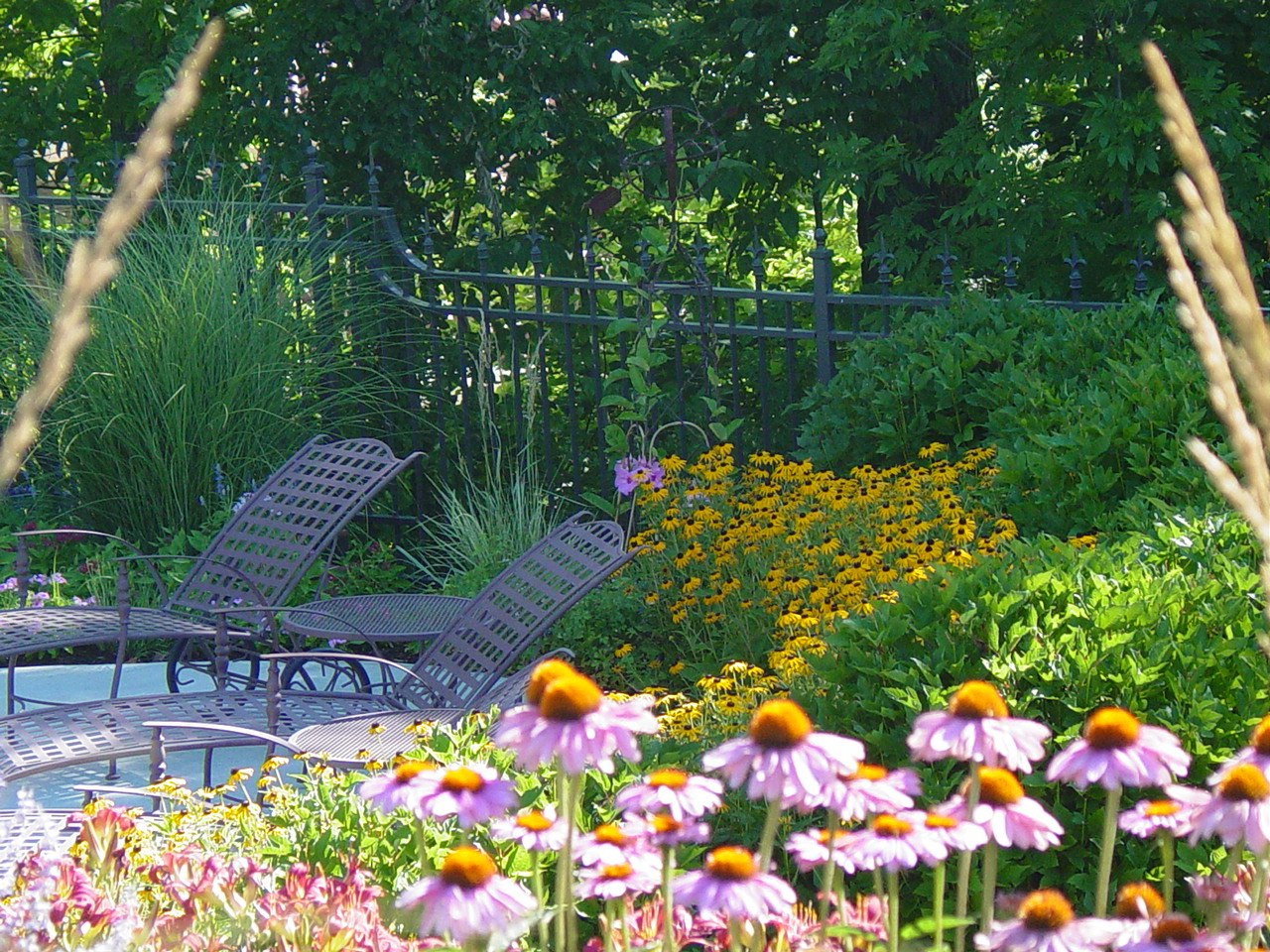 Masses of native perennials attract insects birds need for food.