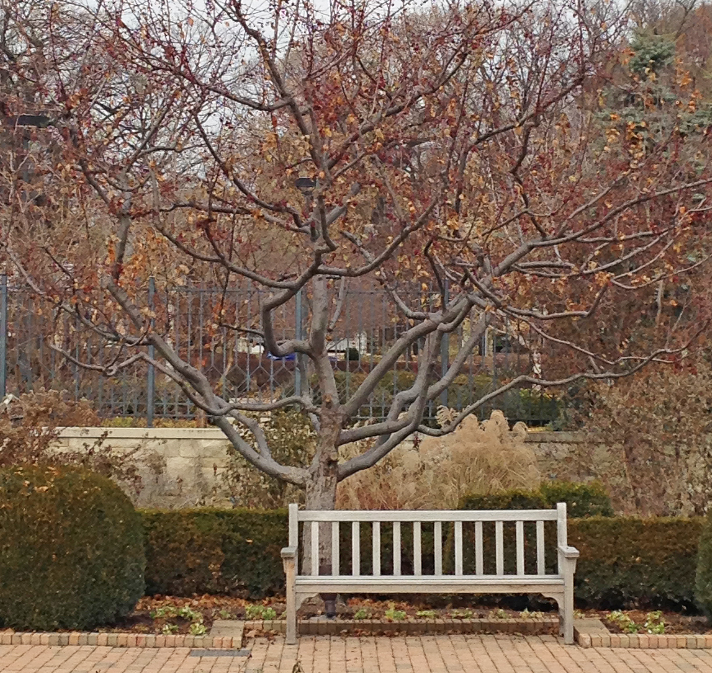 A few preventative steps will help keep trees and shrubs strong and healthy through the winter.