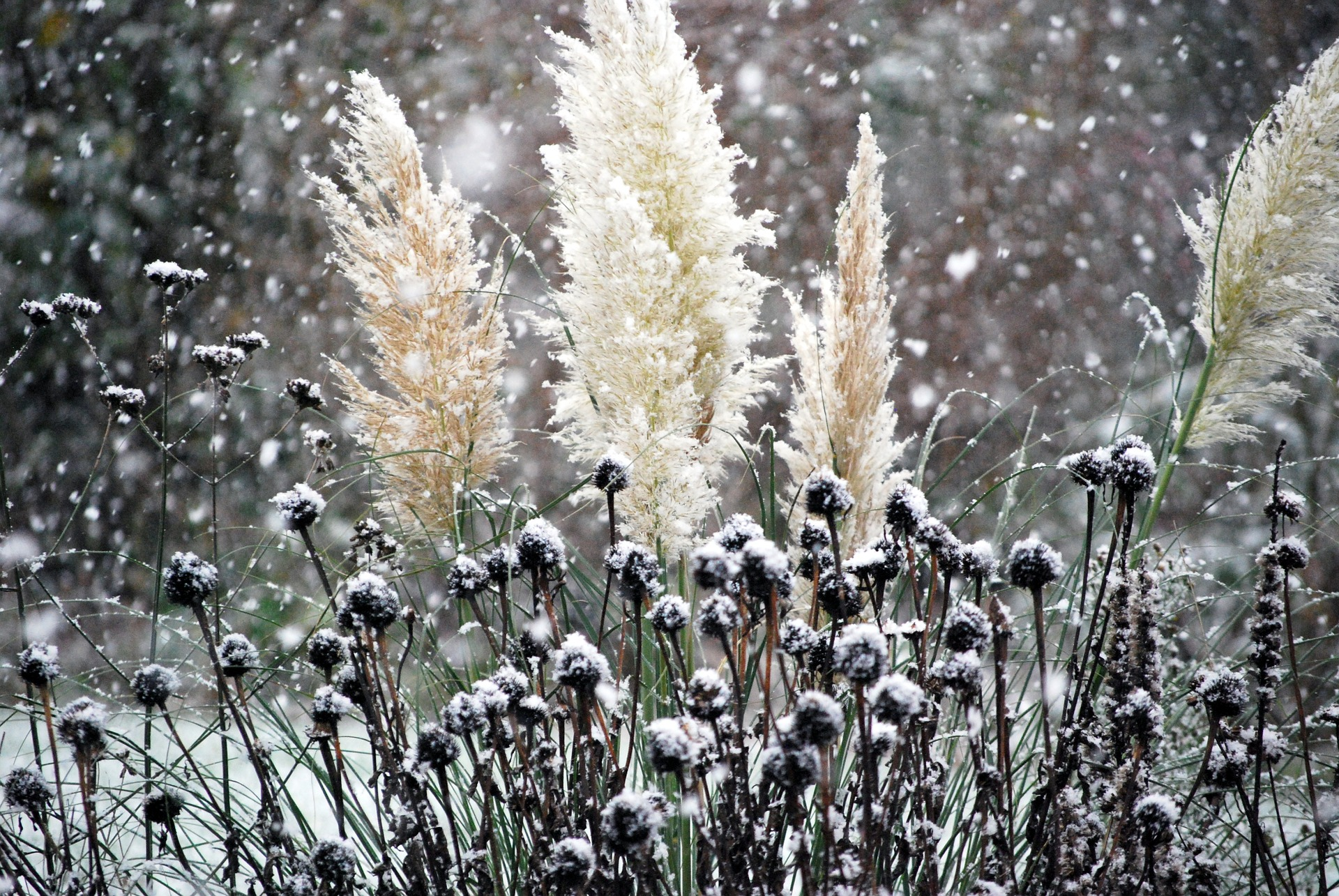 Seed pods and flower heads create a striking winter display.