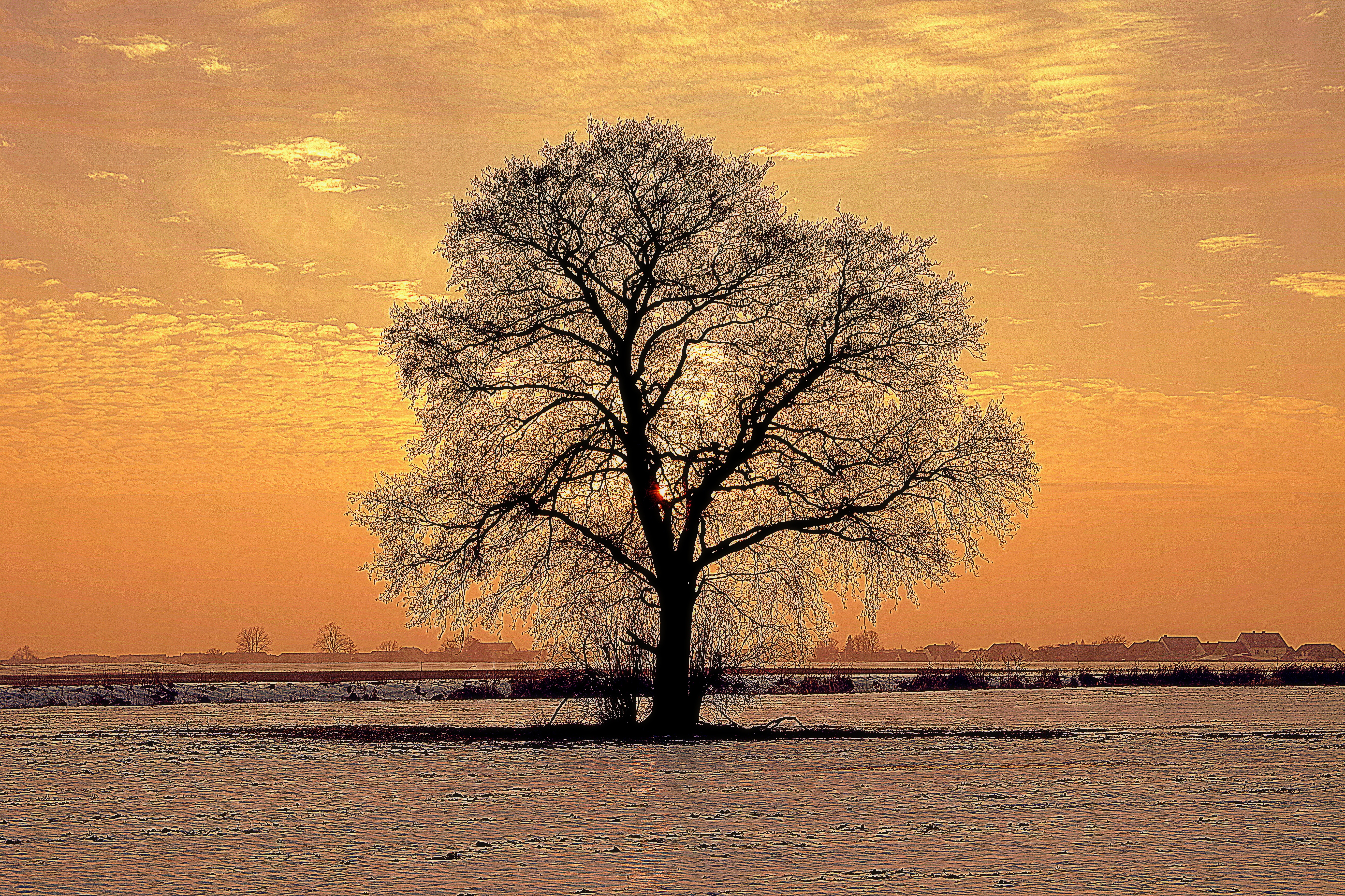 Winter is an excellent time to study the shape of deciduous trees.