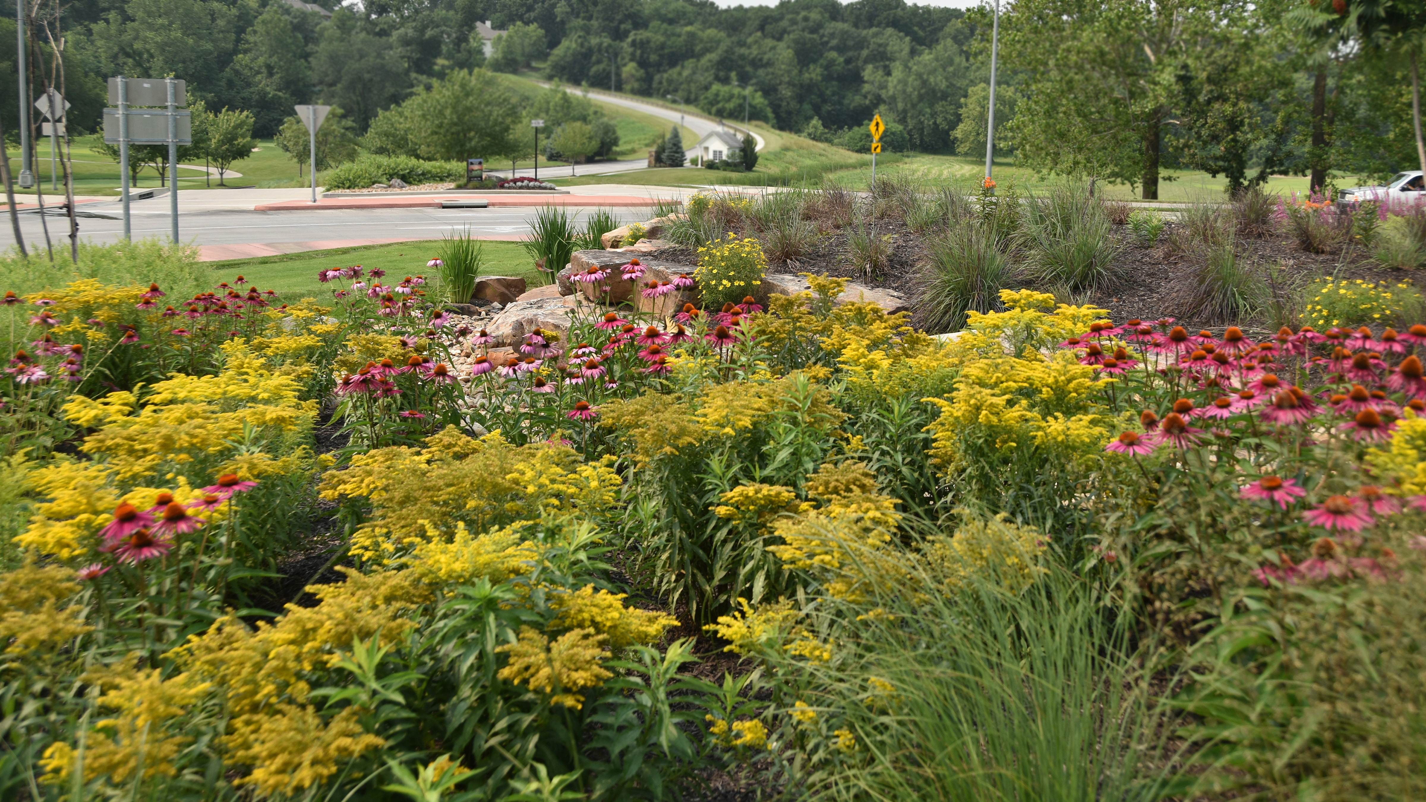 Beds of native plants in full bloom bring a sense of Place to the surrounding neighborhoods.