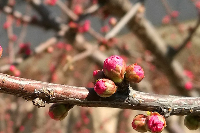 Bursting buds are a response to seasonal and climactic events.