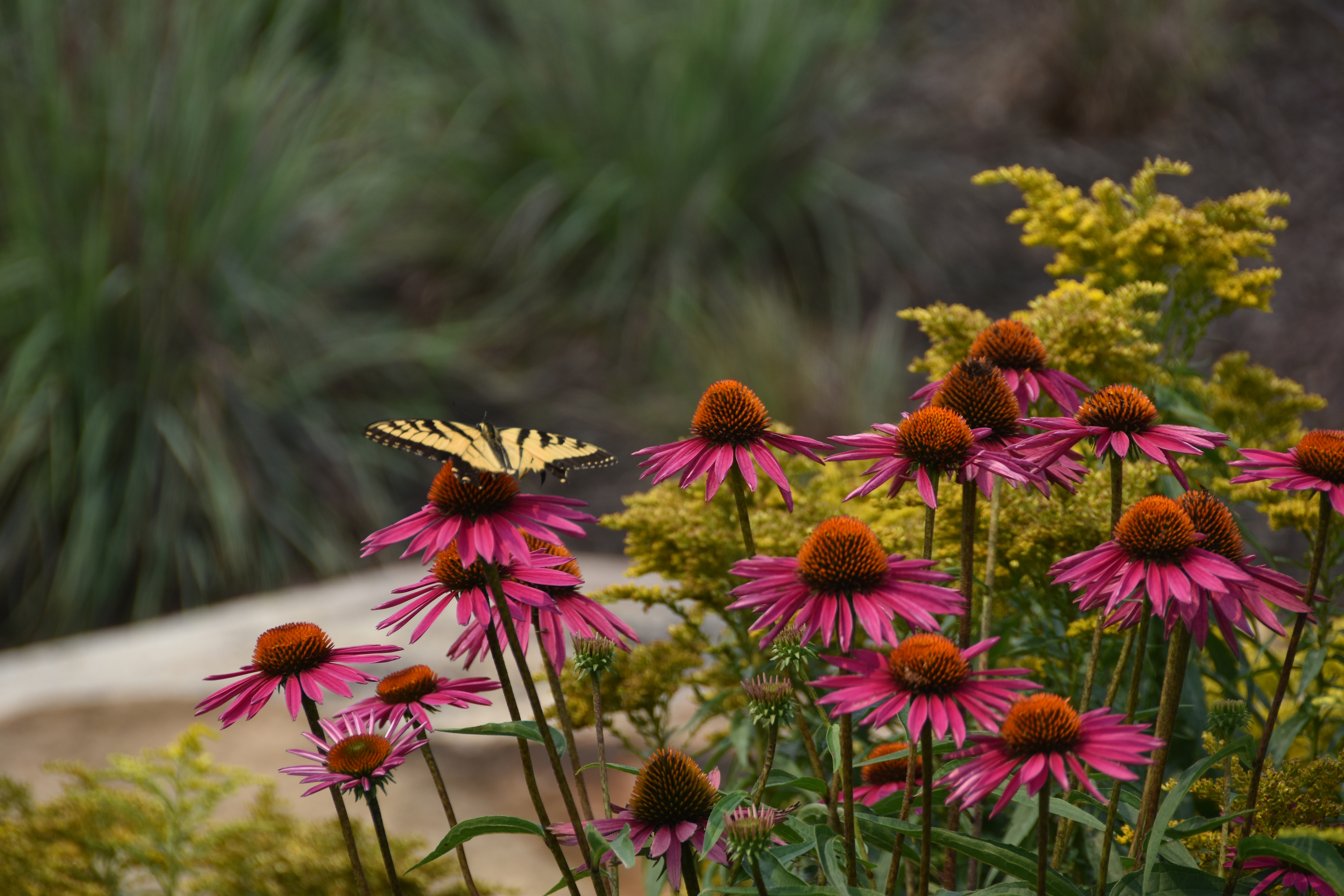 Create a sense of place by using native plants in your landscape.