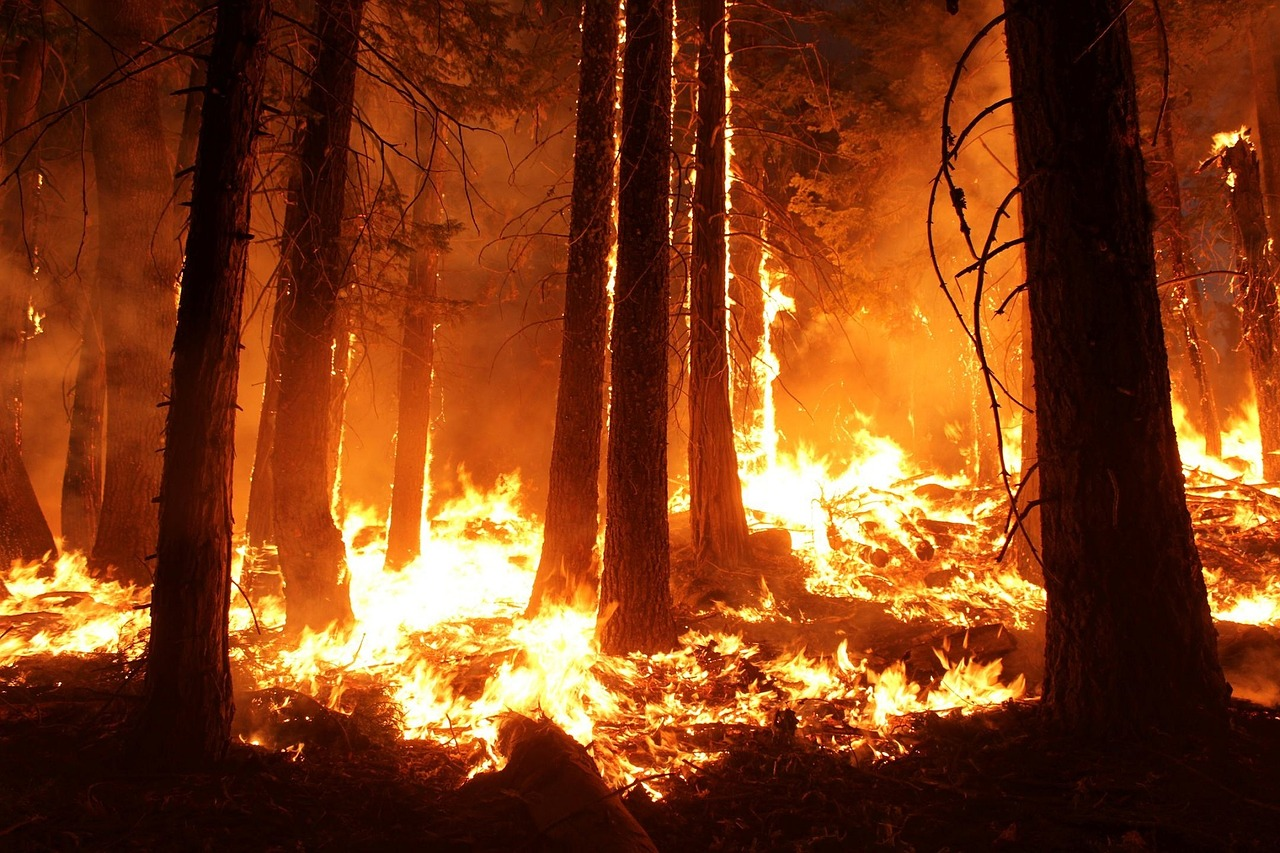 As precipitation amounts change, forest fires will become even more common.