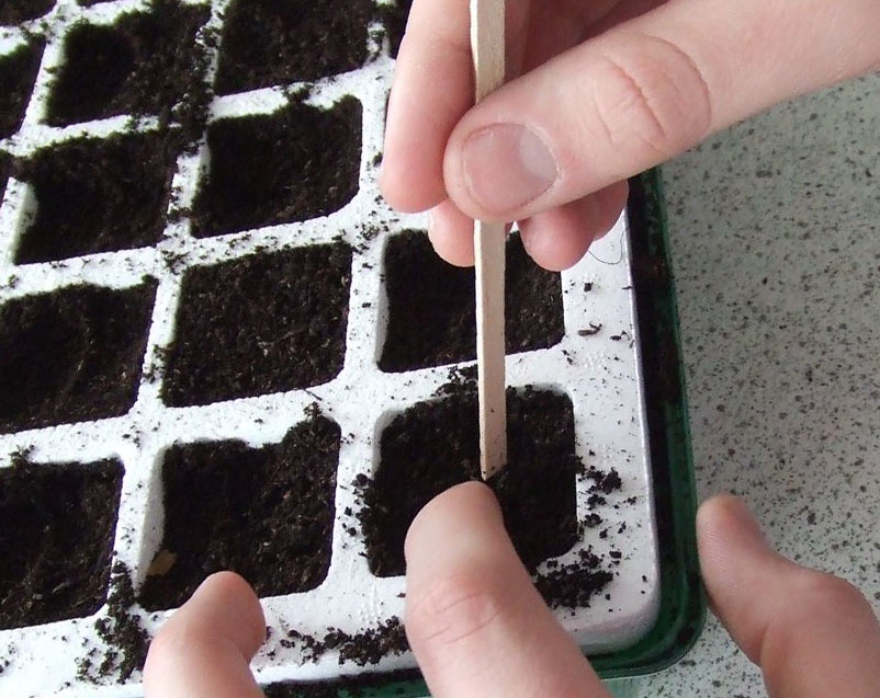 Using plastic trays with cells allows you to grow multiple varieties in a small space.