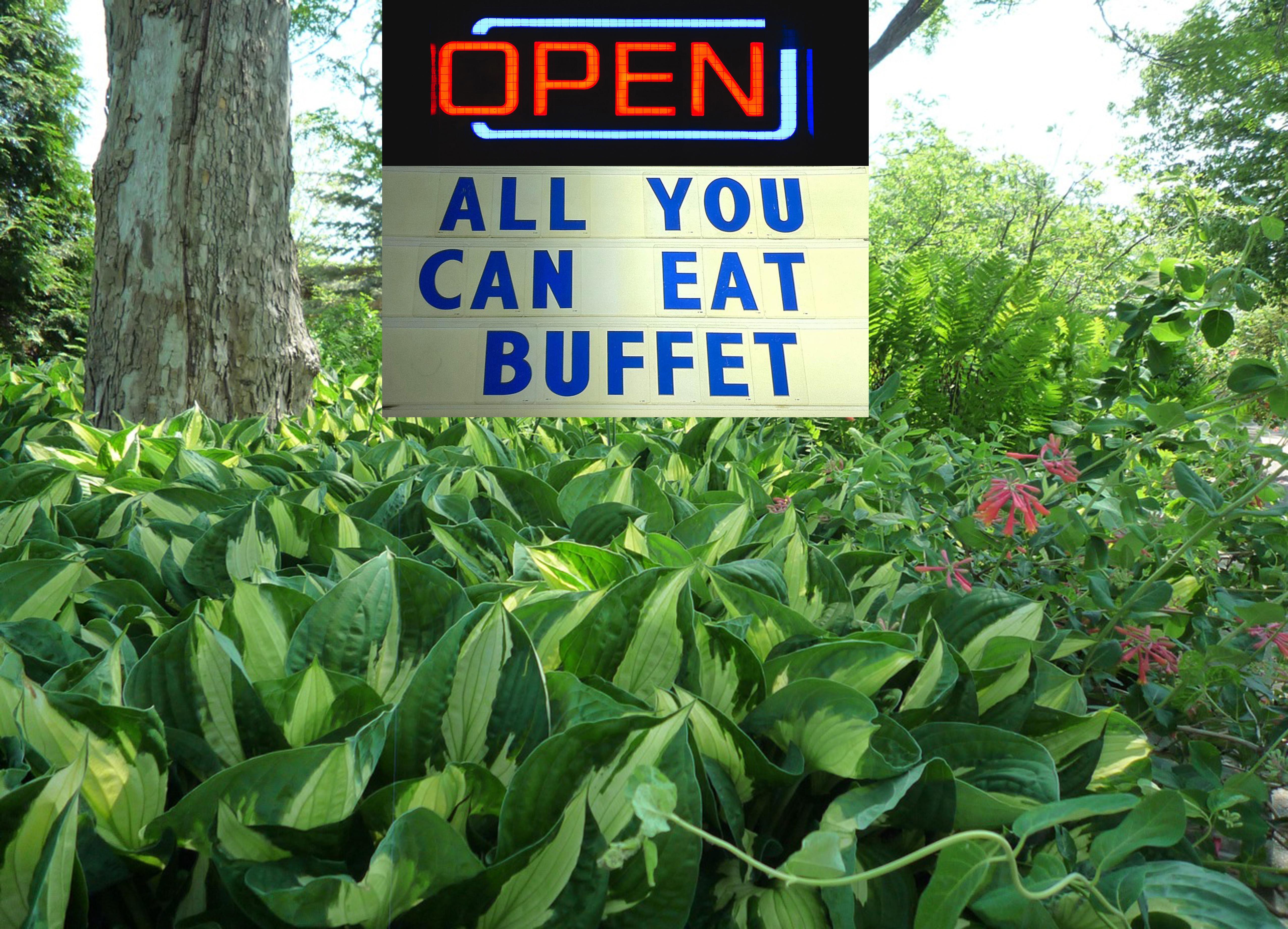 A well landscaped yard can become a deer buffet.