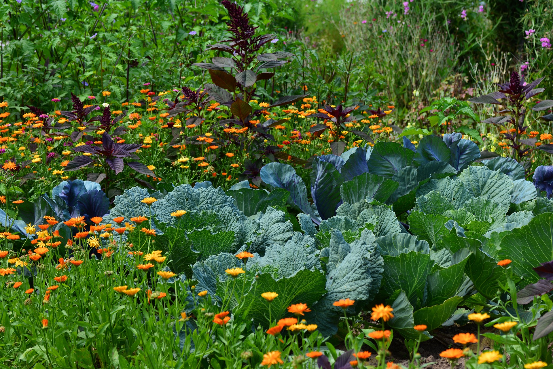 Inter-planting groundhog resistant plants with vegetable can help protect your garden.