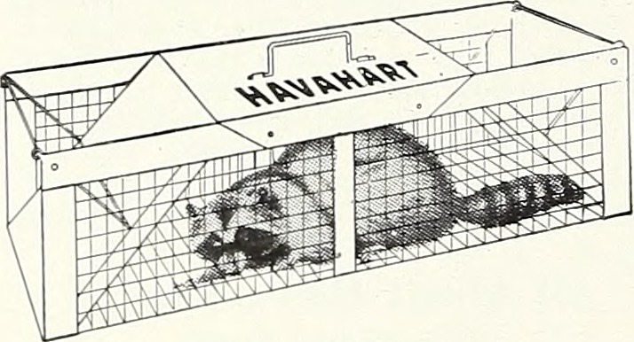 Live traps can be used to humanely trap and relocate nuisance animals.