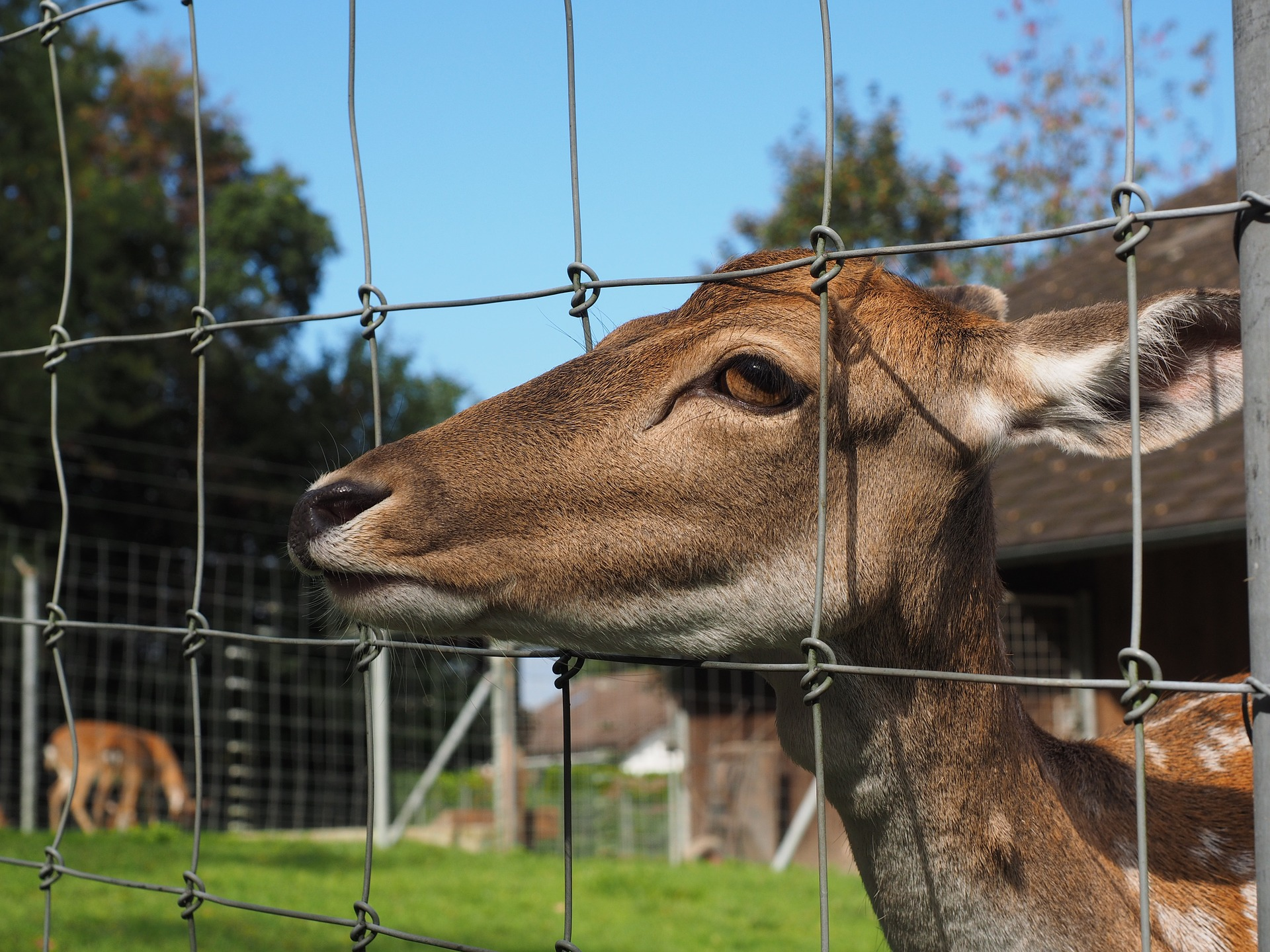 Fencing can be an effective way to keep deer from grazing in your yard.