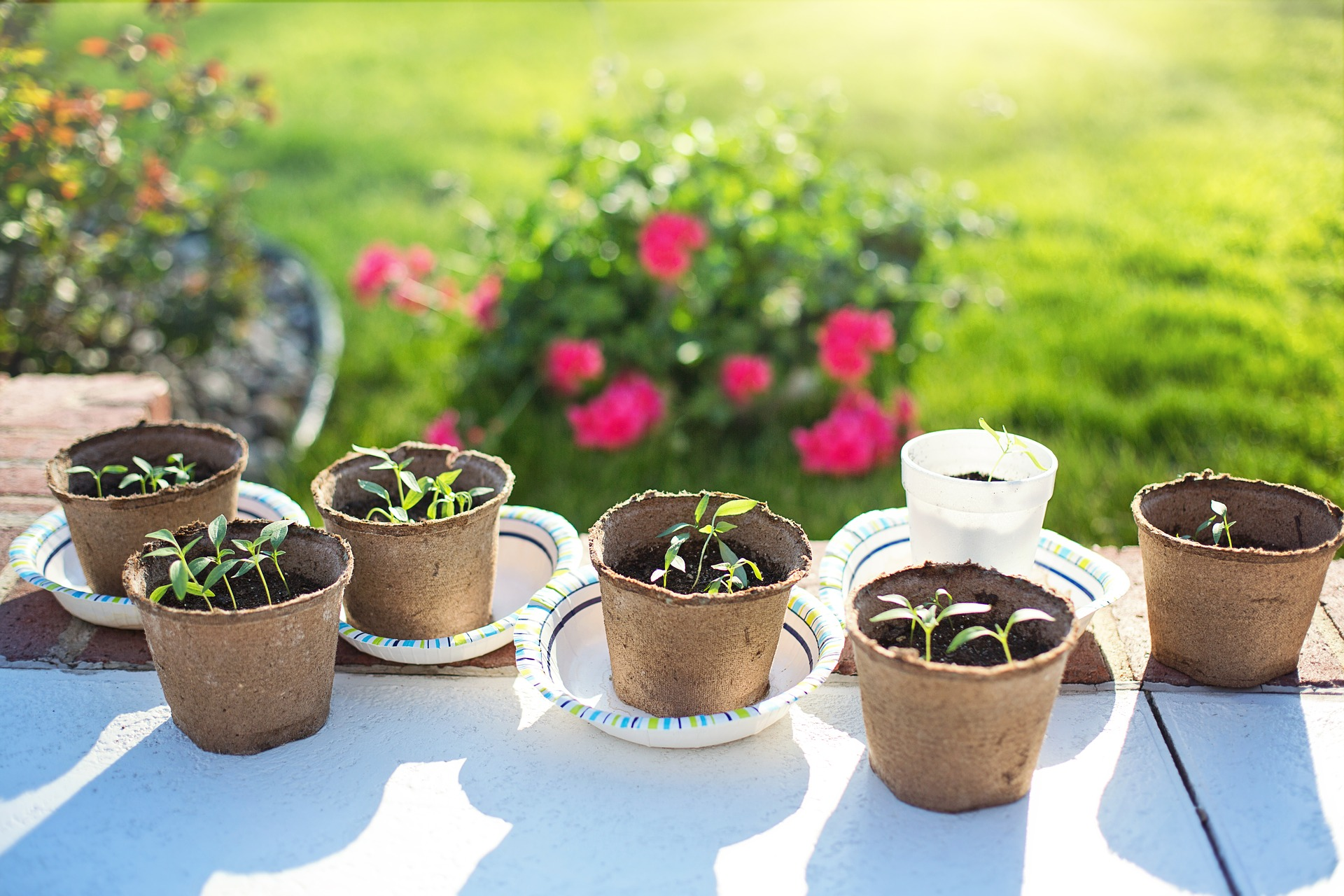 The hardening off process is an important step in growing your own herbs outdoors.