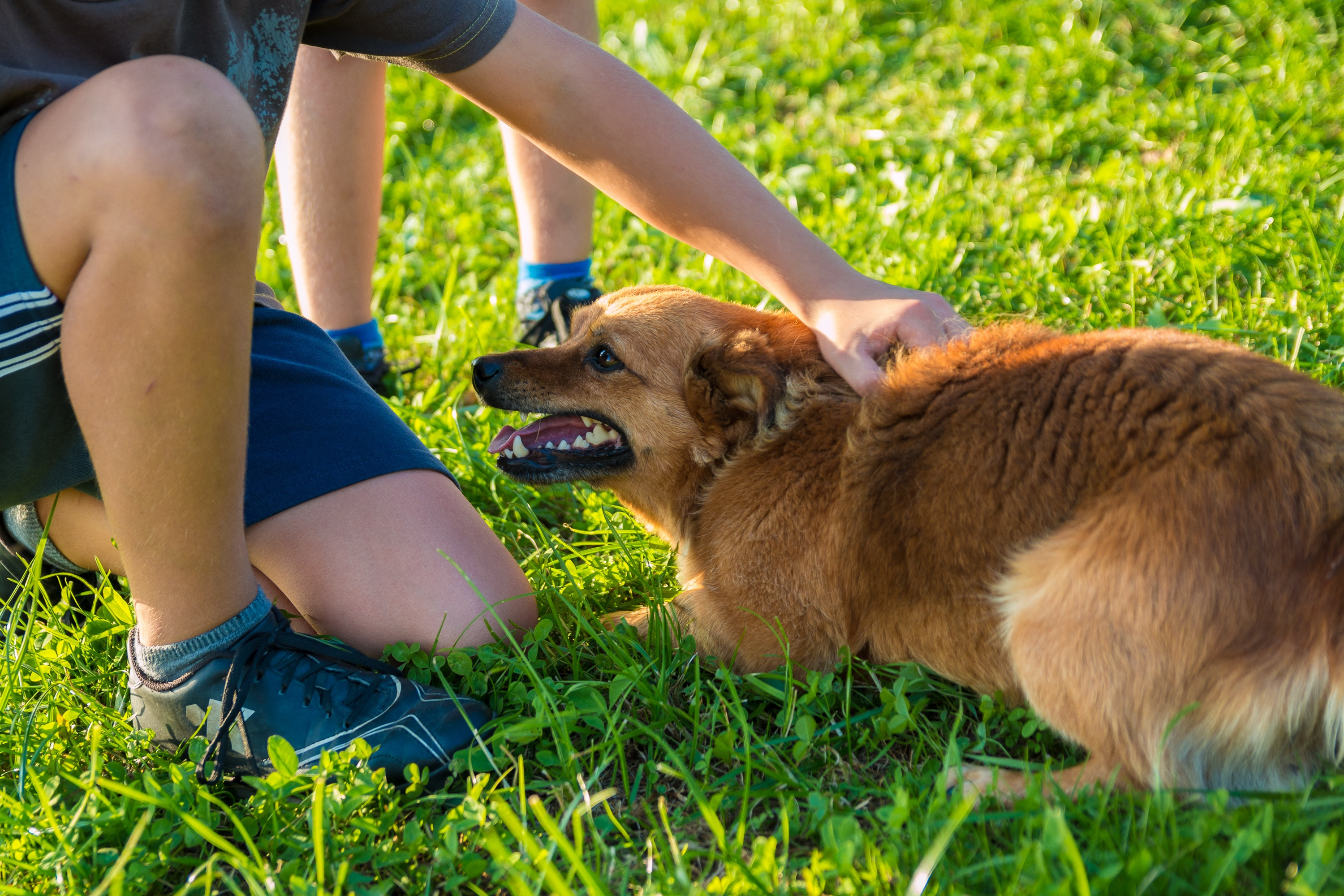 Fewer chemicals mean a safer place to play for children and pets.