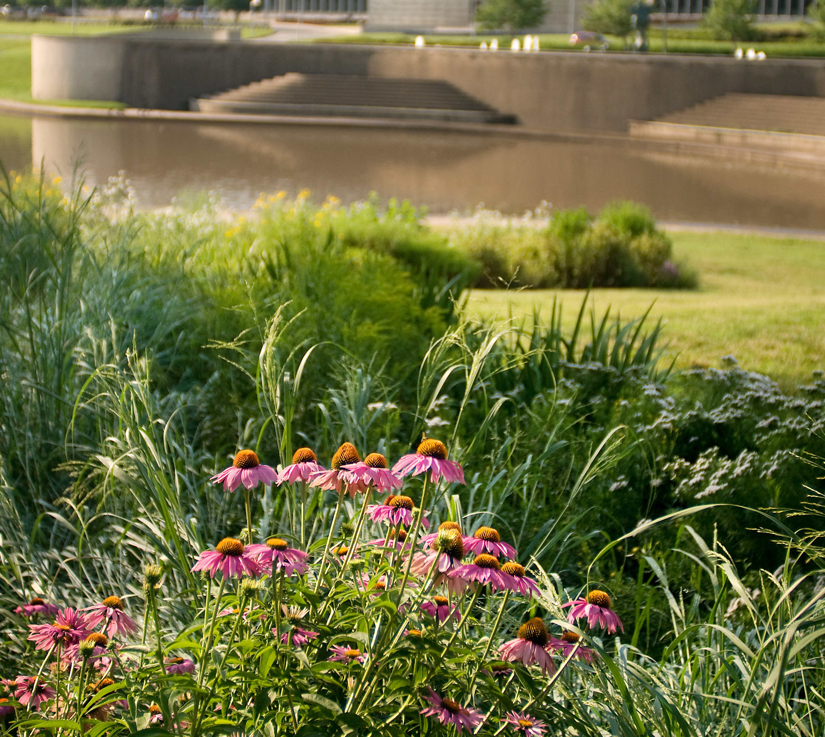 Not just functional, rain gardens can be a beautiful addition to your landscaping.