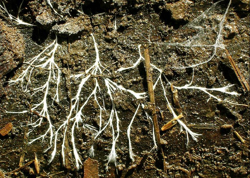 Soil fungi, pictured here, are important decomposers.