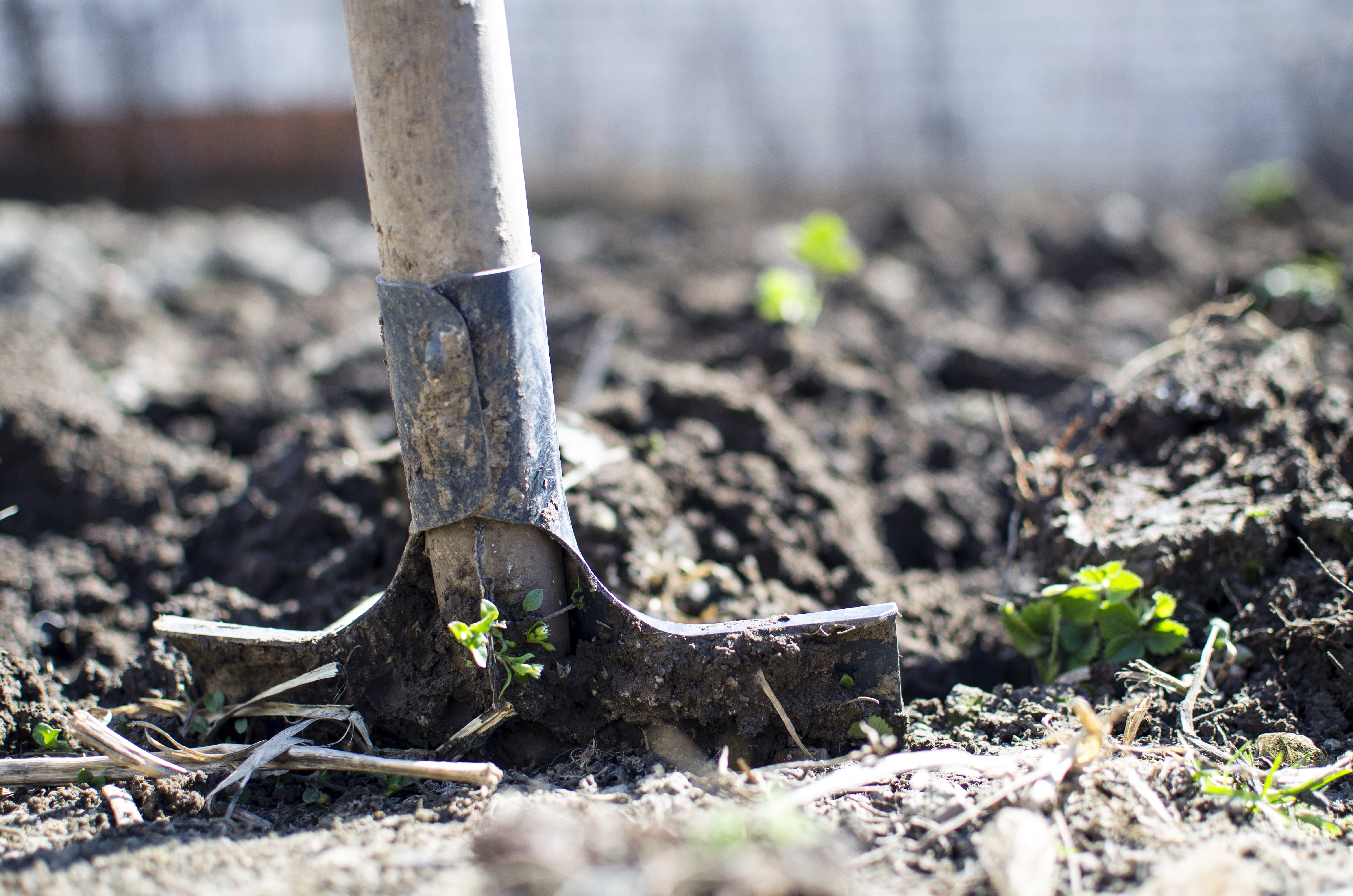 Few gardeners find loamy soil throughout their property.