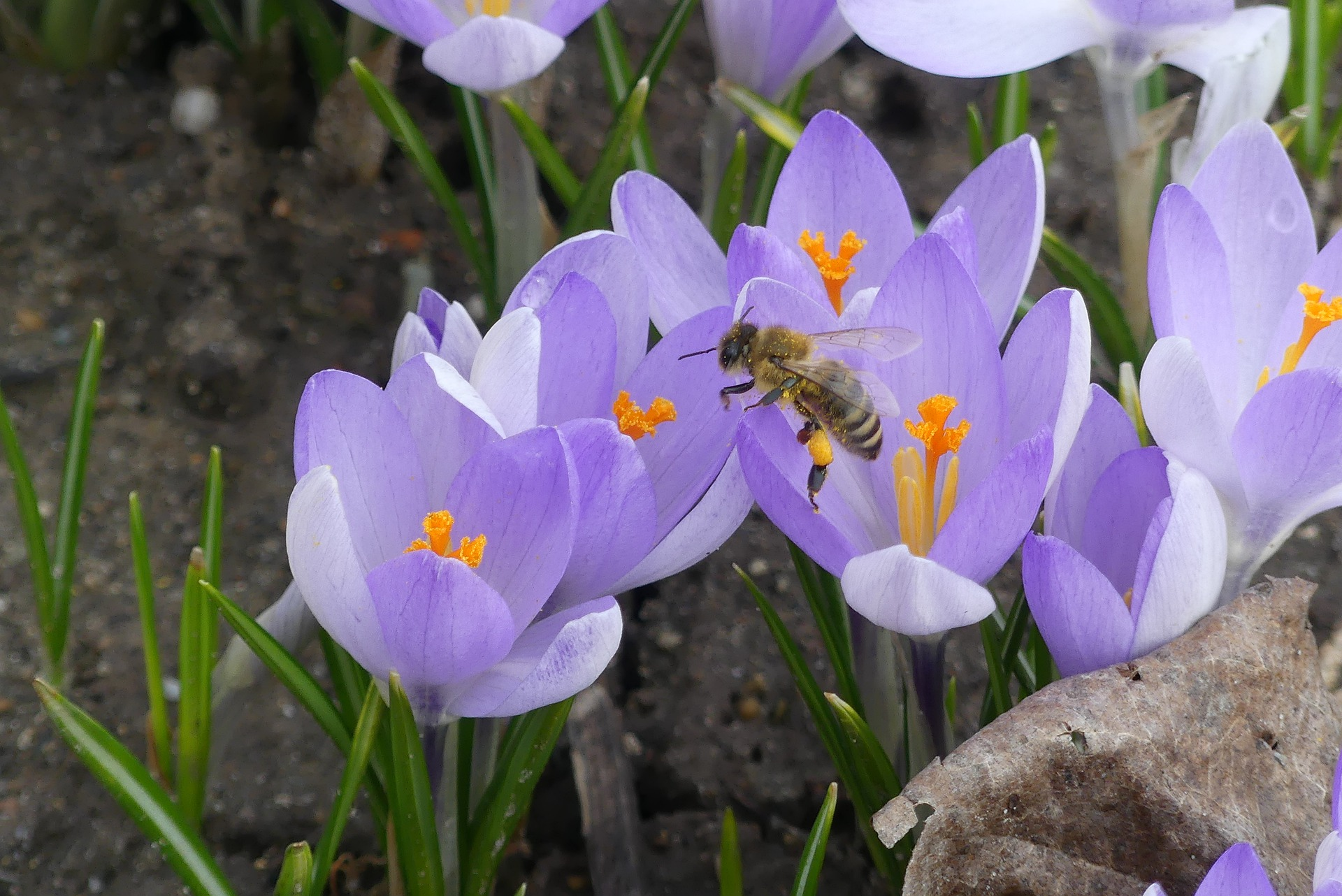 -- sun or part shade -- purples, white, yellow -- some varieties fragrant