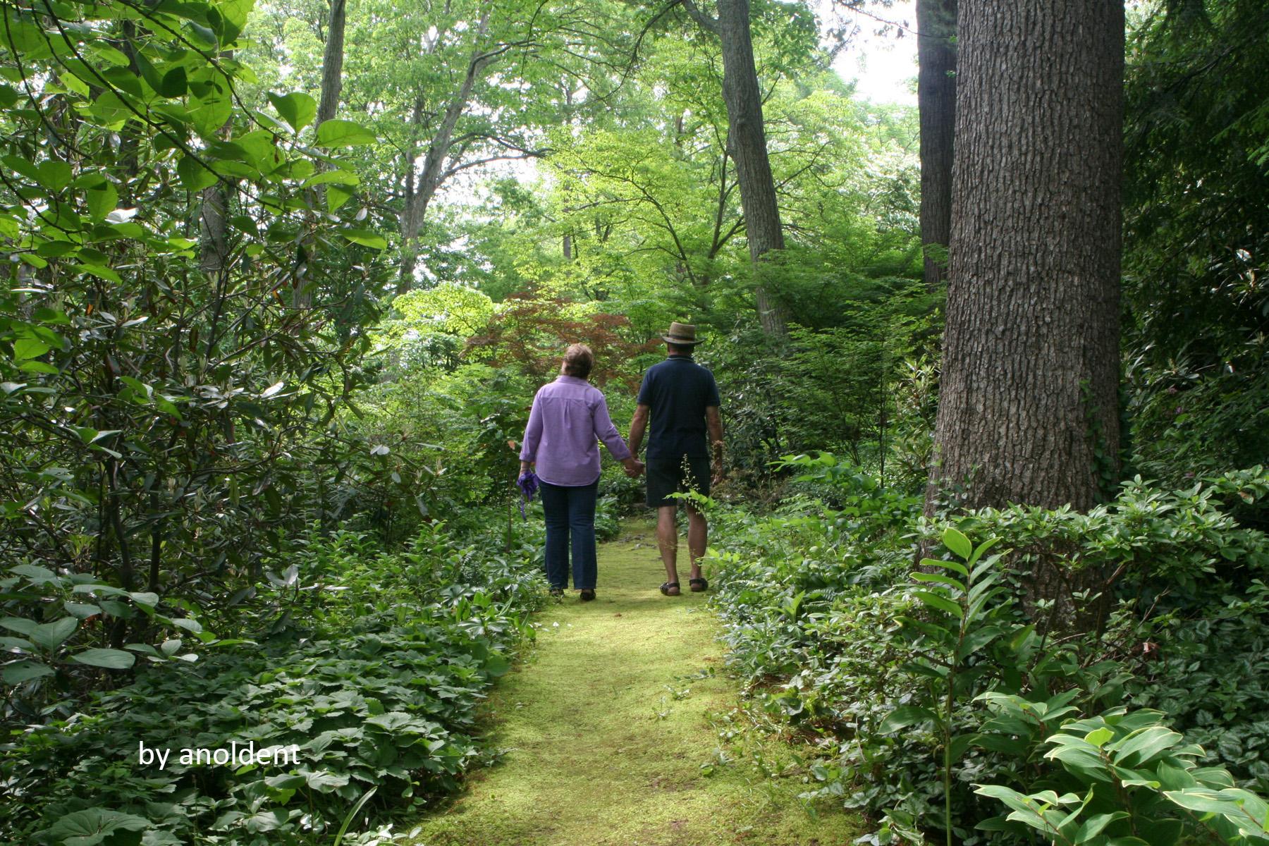 Design Principles For Shade Gardens Blog Embassy Landscape Group
